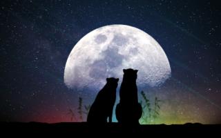 Volle maan oktober